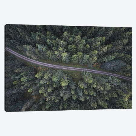 Small Road Through The Forest Canvas Print #CLI20} by Christian Lindsten Canvas Artwork