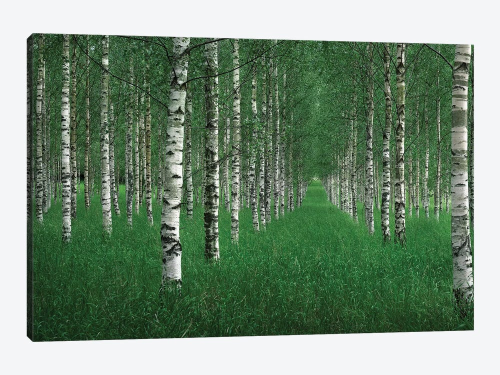 The Tunnel by Christian Lindsten 1-piece Canvas Artwork