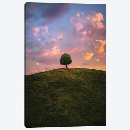 Tree On Hill During Sunset Canvas Print #CLI27} by Christian Lindsten Canvas Print