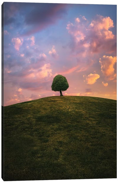 Tree On Hill During Sunset Canvas Art Print