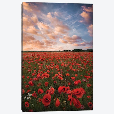 Poppy Field In Sweden Canvas Print #CLI29} by Christian Lindsten Canvas Artwork