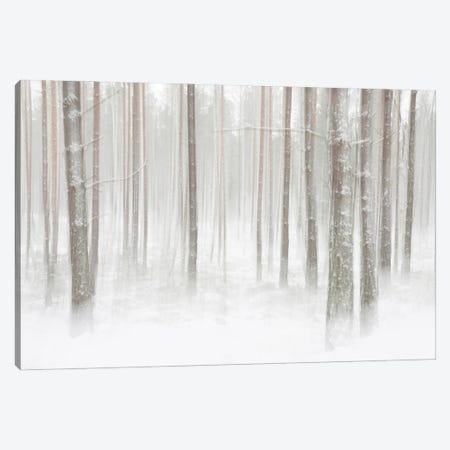 Winterforest In Sweden Canvas Print #CLI32} by Christian Lindsten Canvas Print