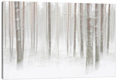 Winterforest In Sweden Canvas Art Print
