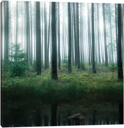 Lake In Forest Canvas Art Print