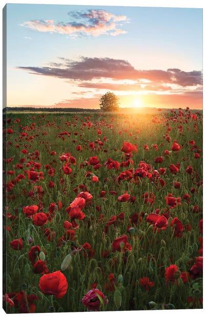 Poppy Fields Of Sweden Canvas Art Print