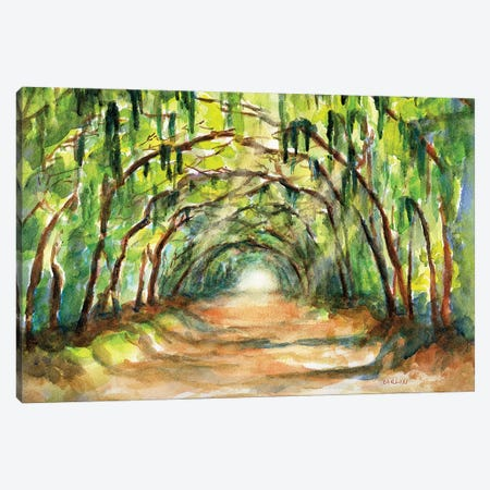 Enchanted Tree Tunnel Canvas Print #CLN17} by Carlin Art Print