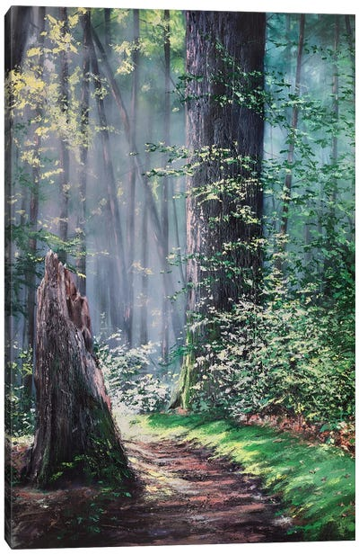 Through A Forest Wilderness Canvas Art Print