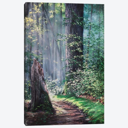 Through A Forest Wilderness 3-Piece Canvas #CLT37} by Christopher Lyter Canvas Print