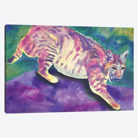 Bobcat Canvas Print #CLU14} by Carissa Luminess Canvas Artwork