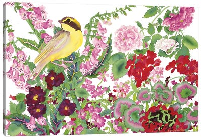 Warbler With Frog Canvas Art Print