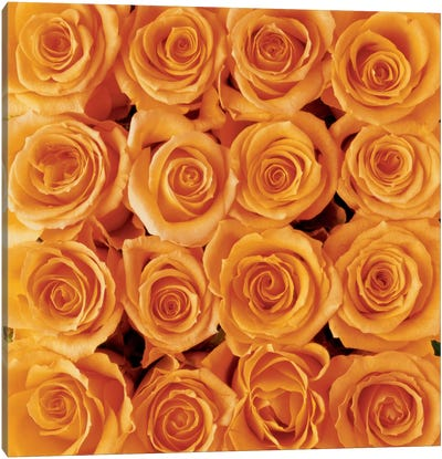 Orange Rose Creation Canvas Art Print
