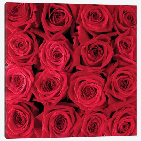 Red Rose Creation Canvas Print #CMB2} by Creatief met Bloemen Canvas Art