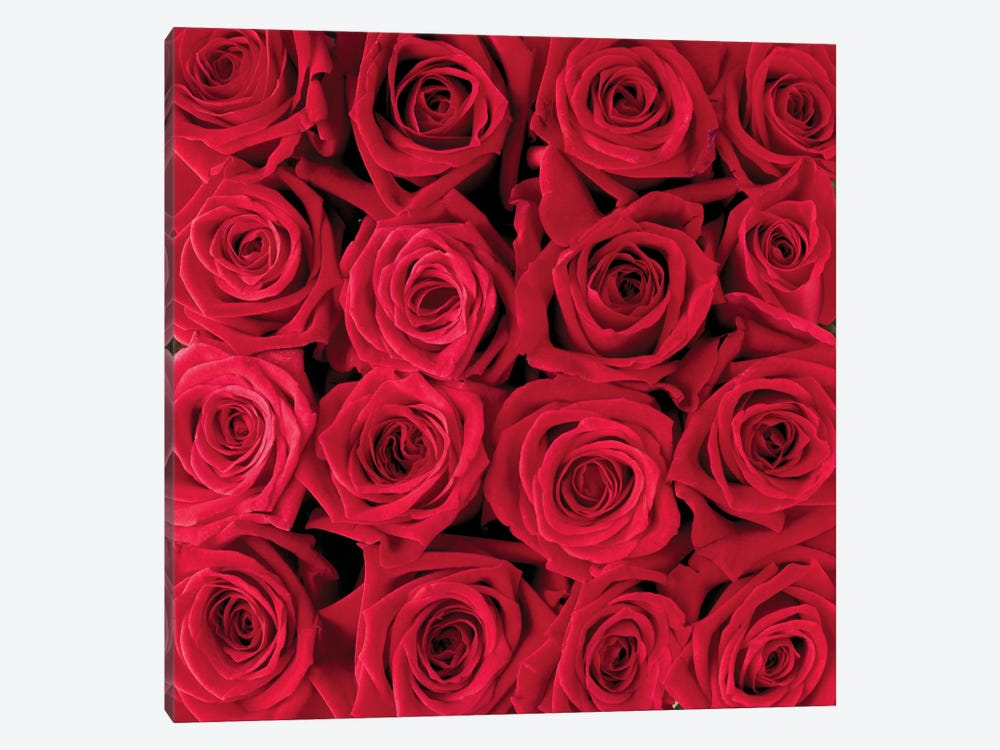 Red Rose Creation 1-piece Canvas Artwork