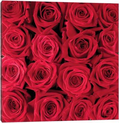 Red Rose Creation Canvas Art Print