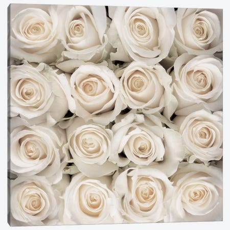White Rose Creation Canvas Print #CMB3} by Creatief met Bloemen Canvas Artwork