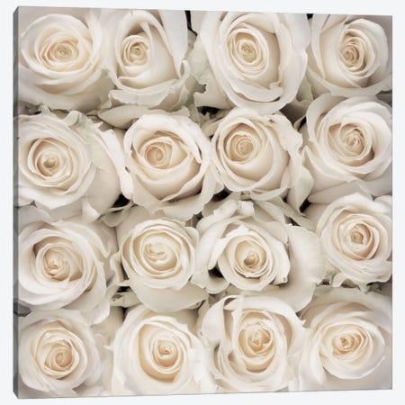 White Rose Creation Canvas Print #CMB3} by Creatief met Bloemen Canvas Artwork