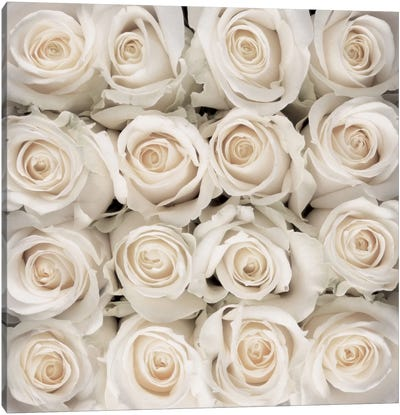 White Rose Creation Canvas Art Print