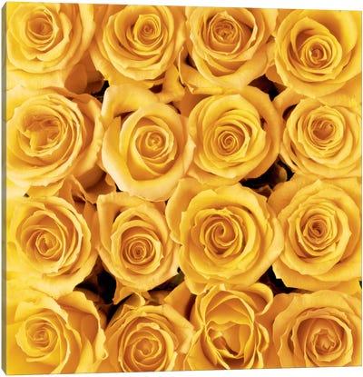Yellow Rose Creation Canvas Art Print