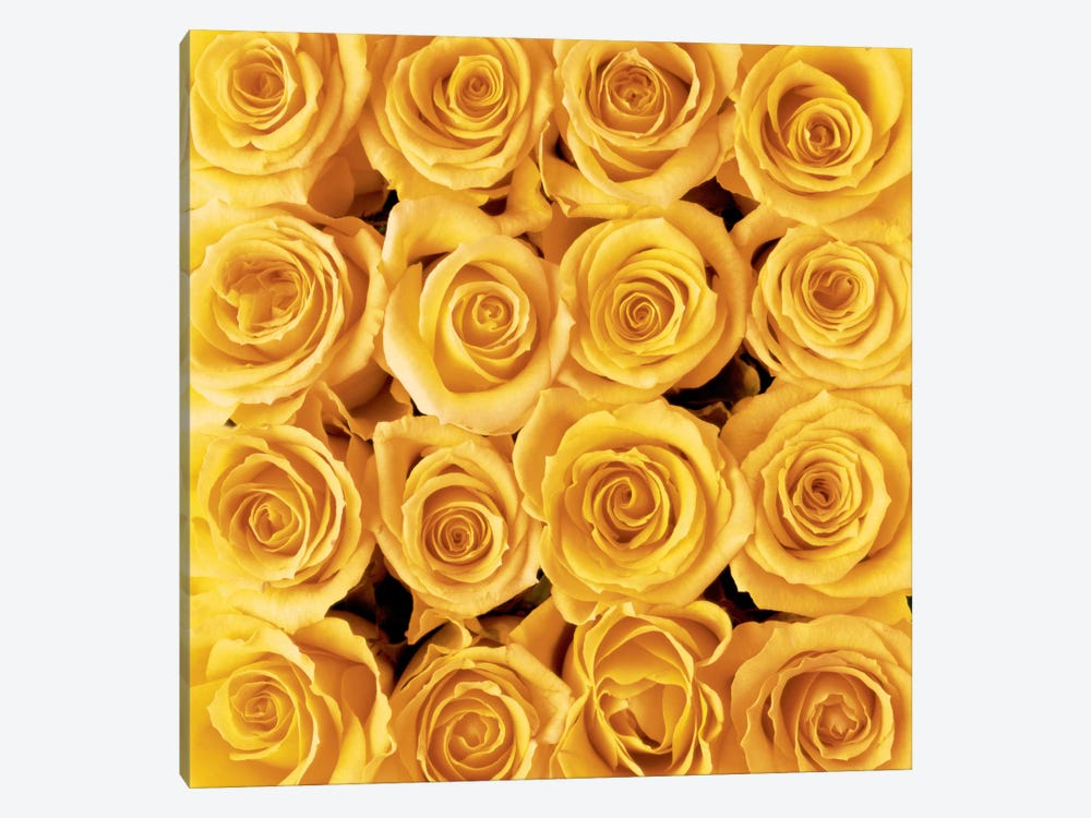 Yellow Rose Creation by Creatief met Bloemen 1-piece Canvas Artwork