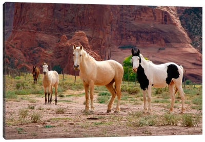 Wild Navajo Horses, Canyon Del Muerto, Canyon de Chelly National Monument, Navajo Nation, Apache County, Arizona, USA Canvas Art Print