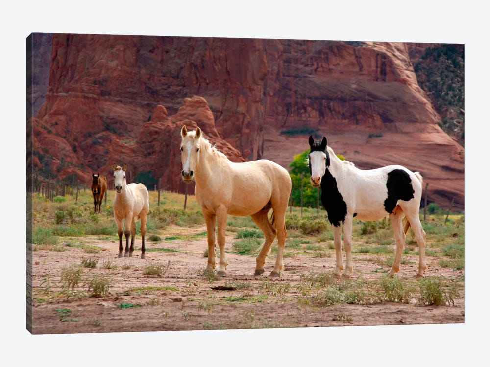 Wild Navajo Horses, Canyon Del Muerto, Canyon de Chelly National Monument, Navajo Nation, Apache County, Arizona, USA by Cindy Miller Hopkins 1-piece Canvas Wall Art