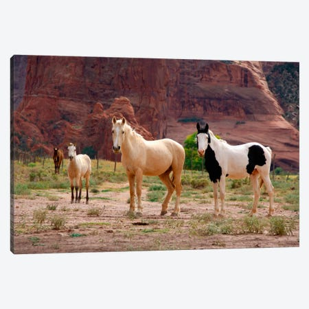 Wild Navajo Horses, Canyon Del Muerto, Canyon de Chelly National Monument, Navajo Nation, Apache County, Arizona, USA 3-Piece Canvas #CMH2} by Cindy Miller Hopkins Canvas Art