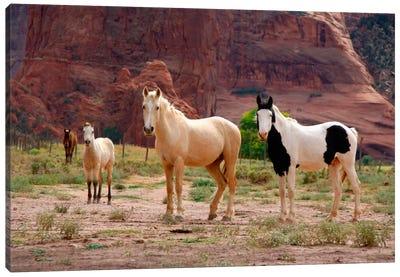 Wild Navajo Horses, Canyon Del Muerto, Canyon de Chelly National Monument, Navajo Nation, Apache County, Arizona, USA Canvas Art Print