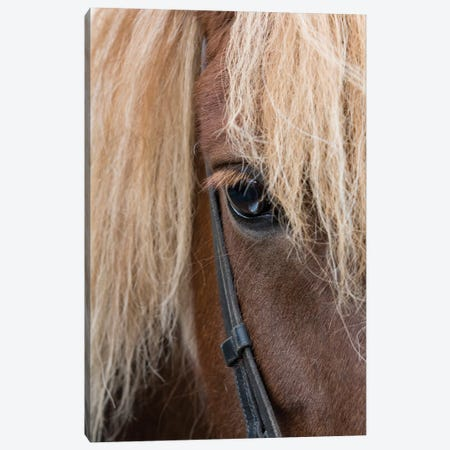 Detail of sorrel horse with flax mane. Canvas Print #CMH7} by Cindy Miller Hopkins Canvas Art Print