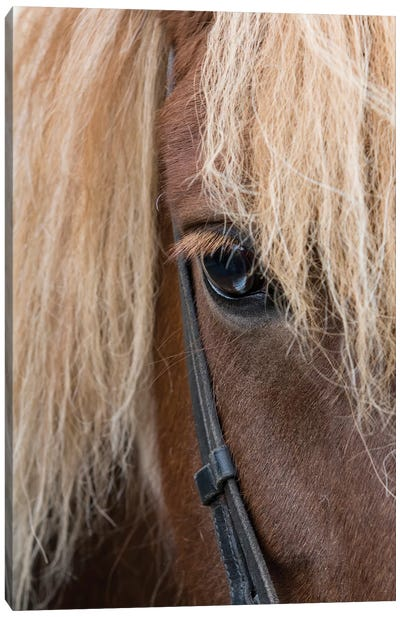 Detail of sorrel horse with flax mane. Canvas Art Print