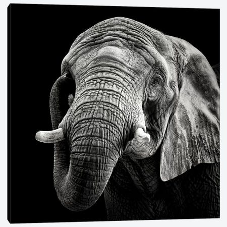 African Elephant Canvas Print #CMM1} by Christian Meermann Canvas Print