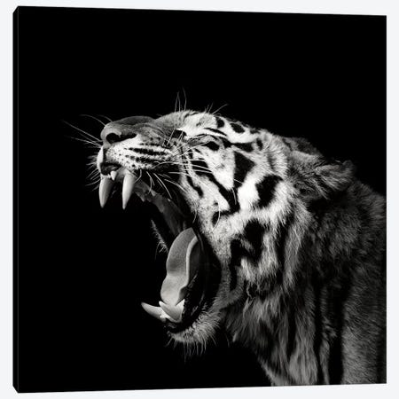 Primal Yawn IV Canvas Print #CMM4} by Christian Meermann Canvas Wall Art