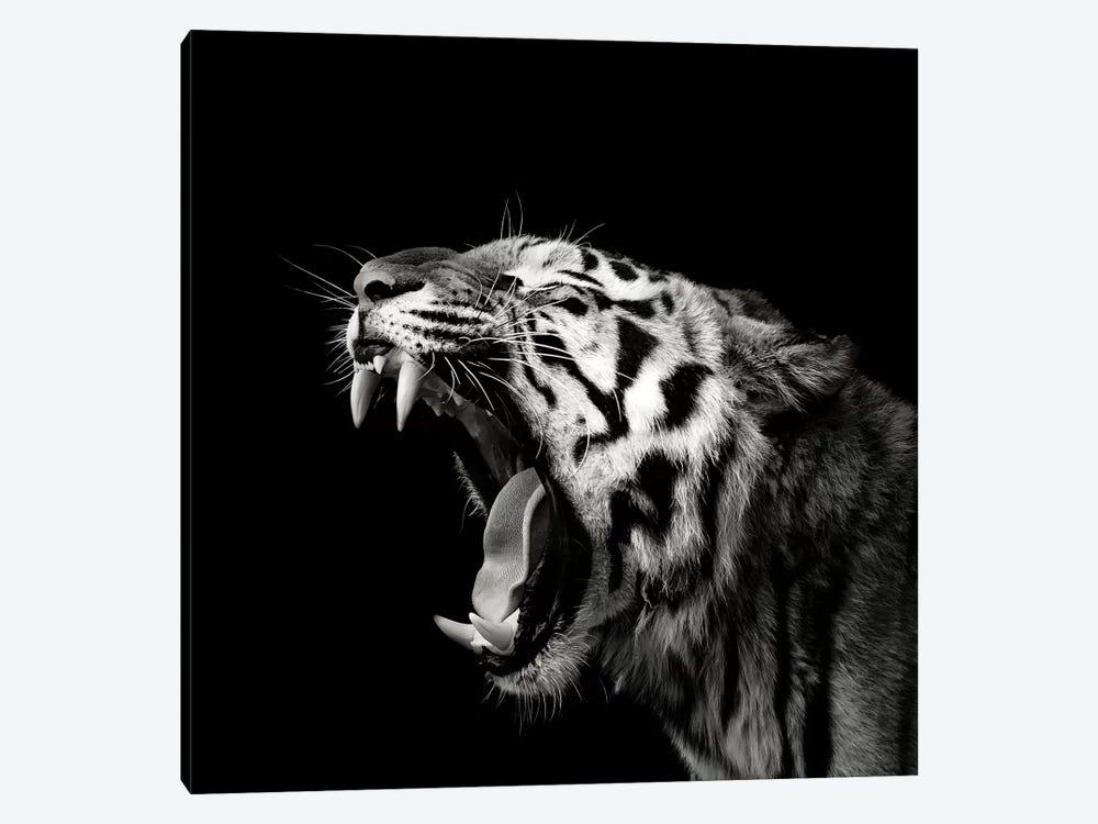 Primal Yawn IV by Christian Meermann 1-piece Canvas Art Print