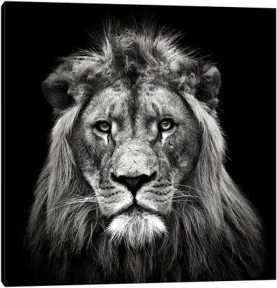 Young Male Lion Canvas Art Print