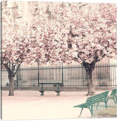 Paris Cherries Canvas Art Print