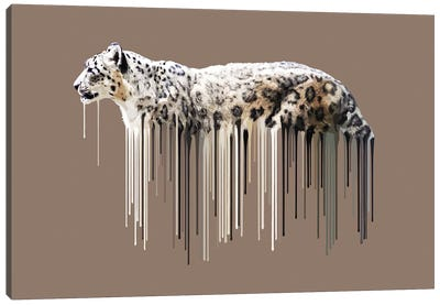 Snow Leopard Canvas Art Print