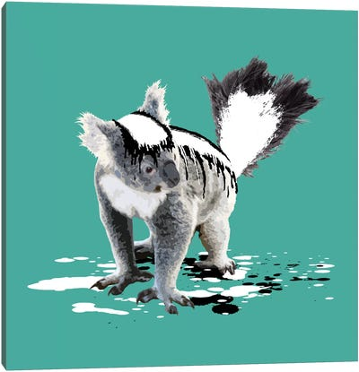 The Koala Who Wanted To Be A Skunk Canvas Print #CMO6