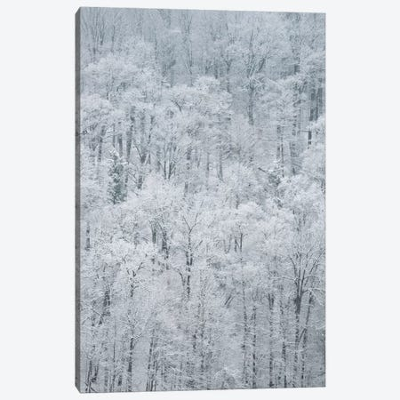 USA, New York State. Snow covered trees, Green Lakes State Park Canvas Print #CMU10} by Chris Murray Canvas Art