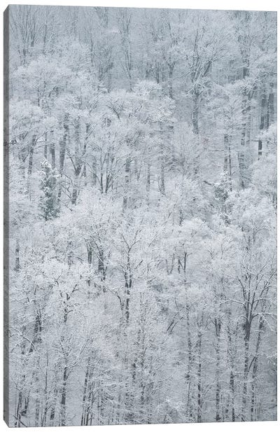 USA, New York State. Snow covered trees, Green Lakes State Park Canvas Art Print