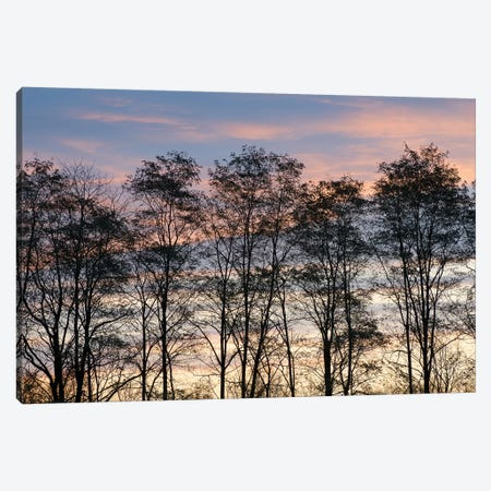 USA, New York State. Trees silhouetted against a November sky. Canvas Print #CMU11} by Chris Murray Canvas Art