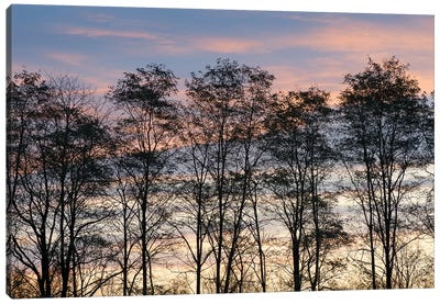 USA, New York State. Trees silhouetted against a November sky. Canvas Art Print