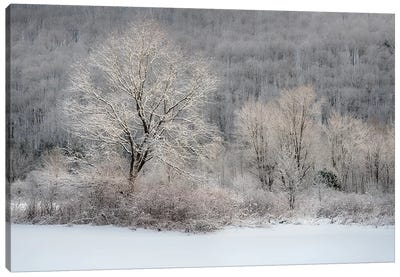 USA, New York State. Morning sunlight on snow covered trees Canvas Art Print