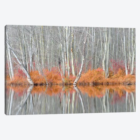 USA, New York State. Bare trees and autumn ferns, Beaver Lake Nature Center. Canvas Print #CMU7} by Chris Murray Canvas Print