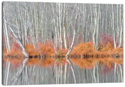 USA, New York State. Bare trees and autumn ferns, Beaver Lake Nature Center. Canvas Art Print