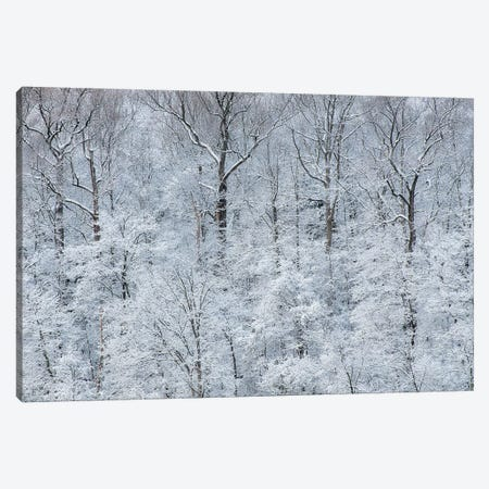 USA, New York State. Snow covered trees, Green Lakes State Park Canvas Print #CMU9} by Chris Murray Canvas Artwork