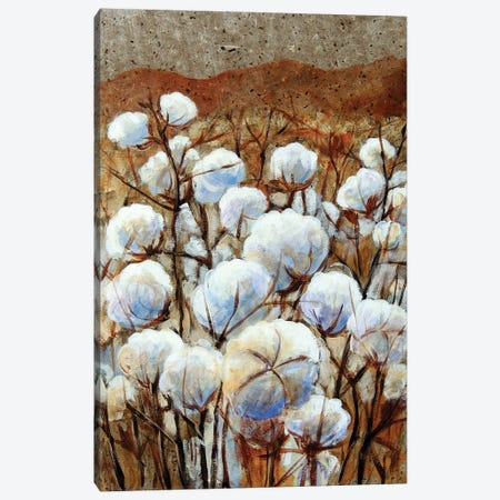 Cotton Fields Canvas Print #CMY11} by Candy Mayer Canvas Art
