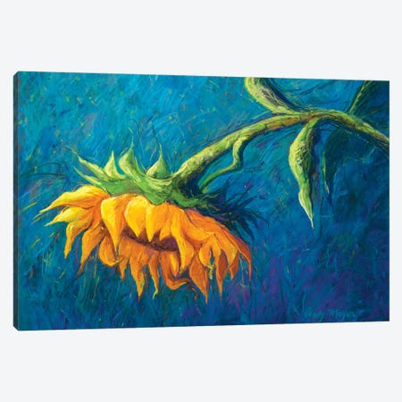 Sunflower Canvas Print #CMY60} by Candy Mayer Art Print