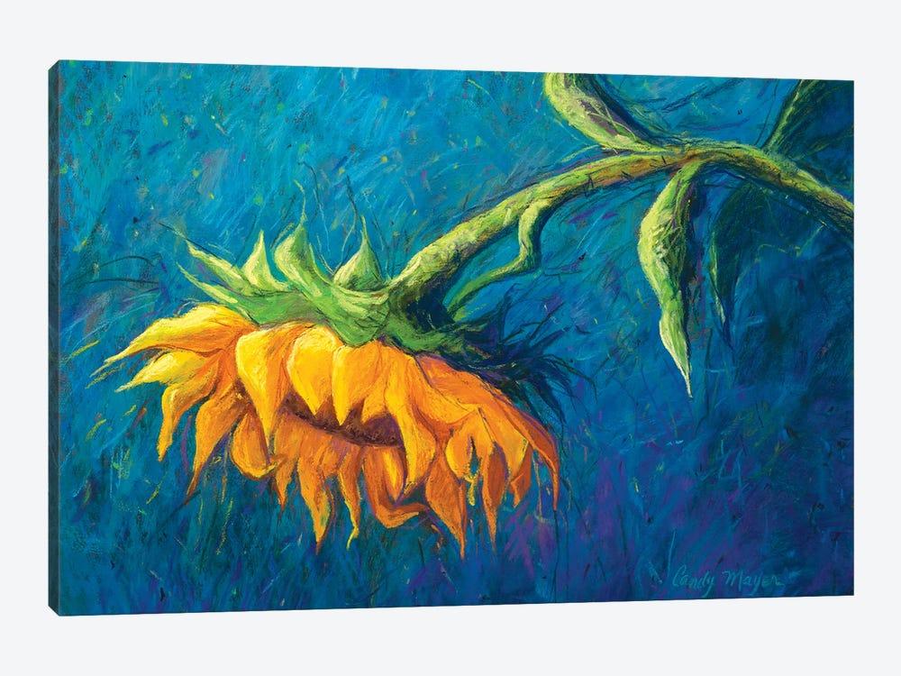 Sunflower by Candy Mayer 1-piece Canvas Art Print