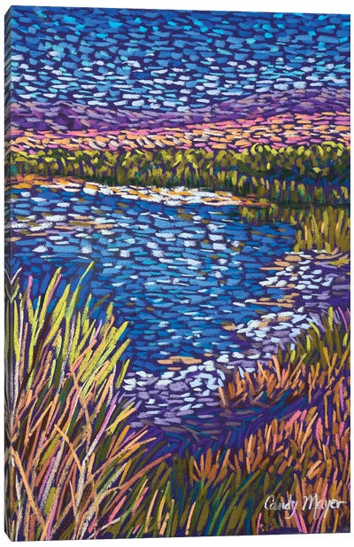 Southwest Wetlands Canvas Art Print