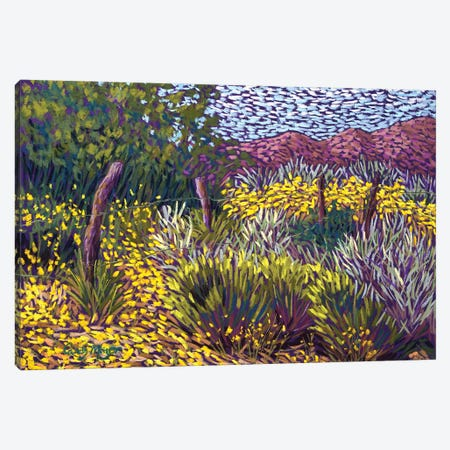 Yellow Fields Canvas Print #CMY95} by Candy Mayer Art Print