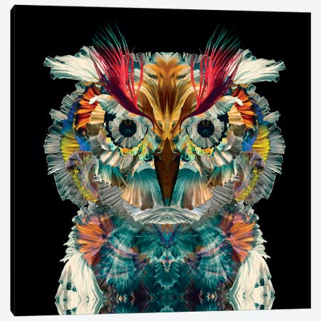 Holy Owl Canvas Print #CMZ39} by Charlie Moon Canvas Print